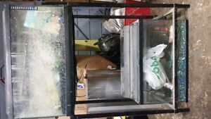 10 Gallon tanks, stand, accessories for sale Kitchener / Waterloo Kitchener Area image 1