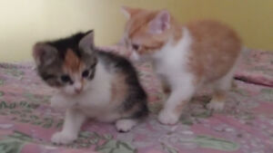 Chatons absolument adorables !!!