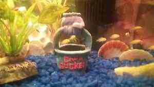 Fish for sale. African cichlids