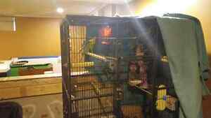 3 birds an cage with everything Windsor Region Ontario image 1