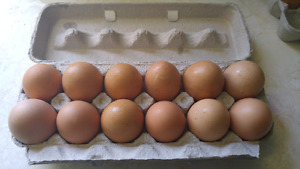 Large eggs for sale