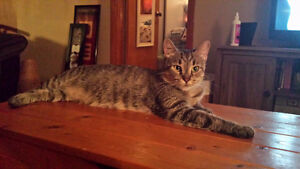Looking for Homes for 2 cats.