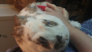Selling a bunny
