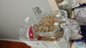 Great Hamster Cage