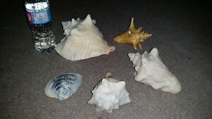 Amazing seashell package only $10 for all. See my other ads..... London Ontario image 2
