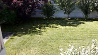$25 lawn cut and trim services