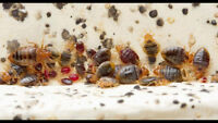Are tired of dealing with bed bugs call 365-889-4540 for a quote