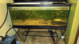 Large 75 gallon tank with accessories