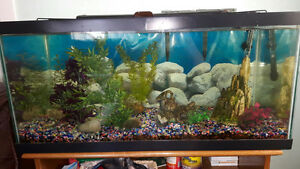 Large Fish Tank with Fish and all Accessories for Sale