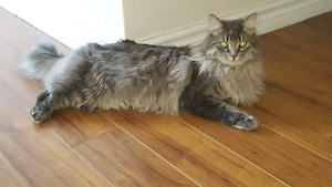 2 beautiful cats looking for a loving home