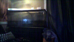 75 gallon fish tank! Comes with everything you need and more!