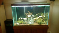 150gal Aquarium For Sale