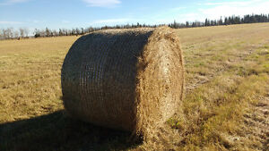 Good Timothy Mix Hay - Price Includes Delivery