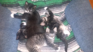 Kittens are looking for a family.