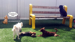 Daycare & resort for small dogs in a certified trainers home