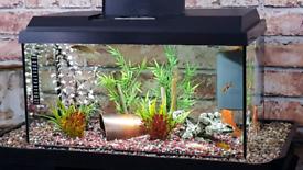 Jewel fish tank.