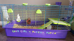 2 guinea pigs both female cage included