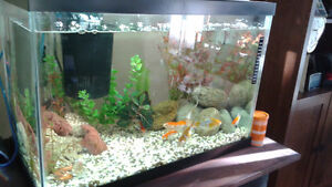 20 gal. aquarium with fish and all accessories