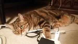 Lost Cat in Orleans