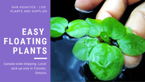 Variety of Floating Plants Available for Sale!