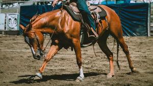École d'équitation western- Écurie SunnyBreeze- Demi- pension
