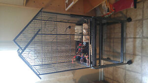 Very large Bird cage with toys and dishes