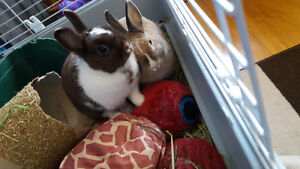 2 Little rabbits looking for home.