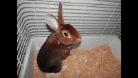 Friendly young bunny for sale