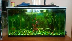30 gallon tank with stand and all accessories