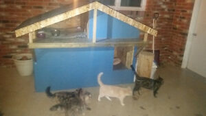 Dog & Cat house for sale