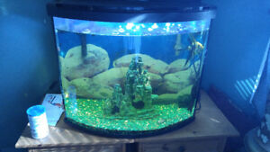 30 gallon bow front tank with fish