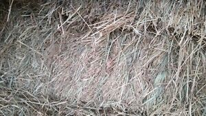 Hay for sale - small squares
