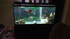 Thinking of switching my 100 and 75 gallons for a 6 foot tank...