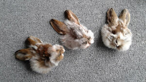 3 Snowshoe Hare Mask