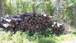 pine and pulp saw logs , skidded winter 2014