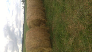 4x5' Round Bales of Dry Hay for Sale!