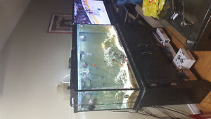 60 gallon saltwater tank with stand.