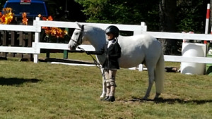 SOLD Beautiful 11.1hh pony for sale