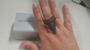 Charles Albert Shark Tooth Ring