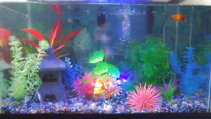 Fish tank w/ 4 mollys & 1 baby molly ALL ACCESORIES *