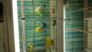 CAGE+CANARIES