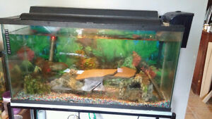 All inclusive Fish and 2 tanks