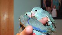 touis bleu 7 bébés nés entre le 24 juin et 1 juillet