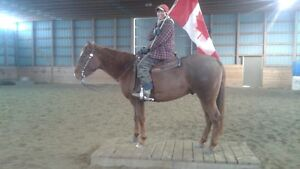 2011 AQHA Gelding FOR SALE - MQH Carrys Last Chex