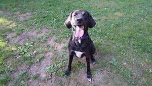Loving and Professional Dog Walking and Pet Care Cambridge Kitchener Area image 9