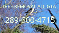 Professionsl Tree Removal Best Price. 289-600-4715..