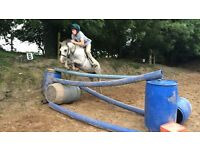 Pony. Beezle