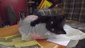 A Fun, Loving, Adorable Kitten To A Good Home