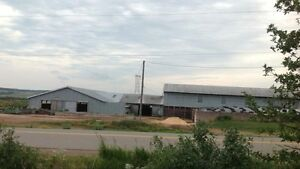 Working beef farm for sale in Nappan, NS Cornwall Ontario image 4