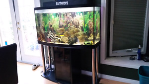 Curved 100 gallon piranhas